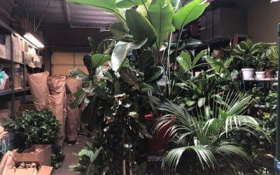 Beautiful Plants Arriving Weekly