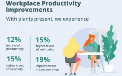 Indoor Plants Impacting Your Workspace