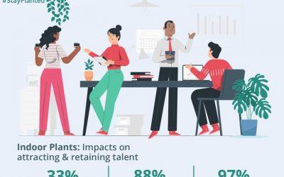 Indoor Plants Attract and Retain Talent