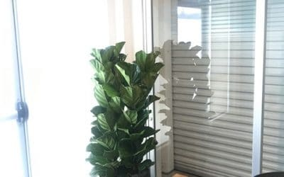 Mountain View Office Plant Installation