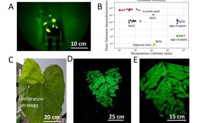 Glow In The Dark Plants