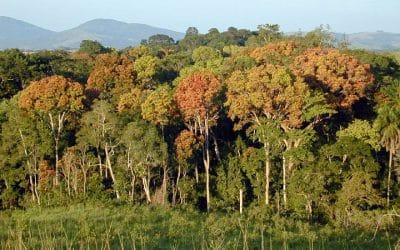 Regenerating Landscapes